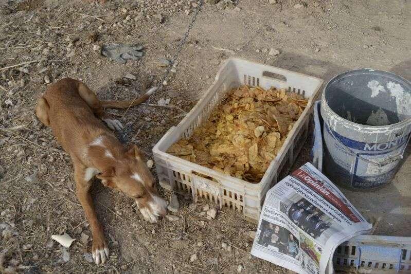 Caja de Patatas Fritas junto a un perro del Caso Patatas Fritas Bullas.