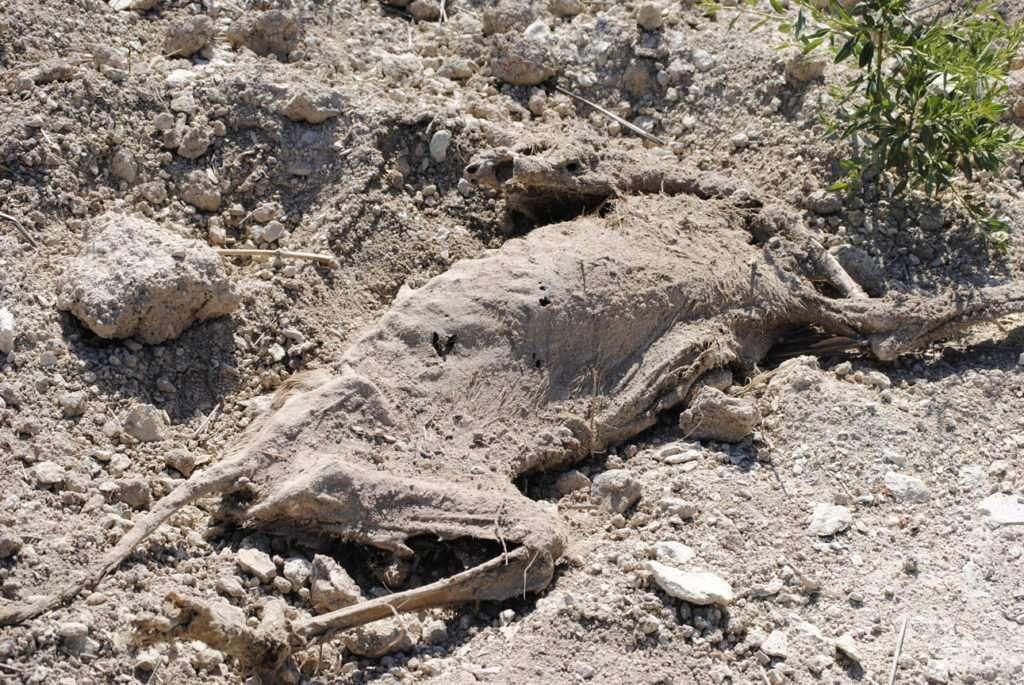 Cadaver de un Perro en el Caso Patatas Fritas Bullas.