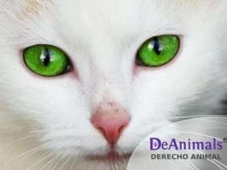 """Cursos Online de Derecho Animal. """"Cómo Proteger Legalmente las Colonias Felinas"""""""