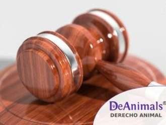 Curso-Online-Derecho-Animal-MedidasCautelares-en-el-delito-de-maltrato-animal-DeAnimals