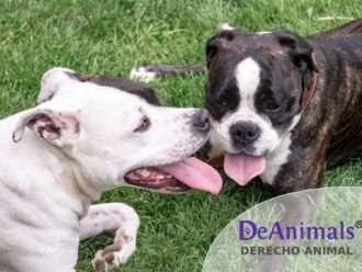 """Cursos Online de Derecho Animal. """"Legislación Aplicable a Perros Potencialmente Peligrosos"""""""