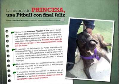 Princesa, una perrita pitbull con final feliz