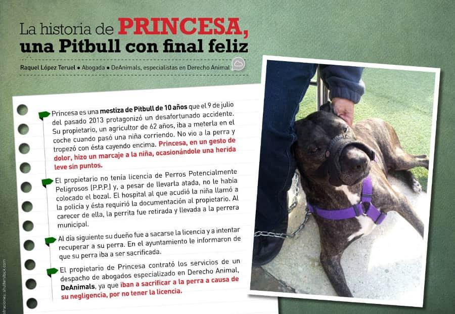 La historia de Princesa, una Pitbull con final feliz