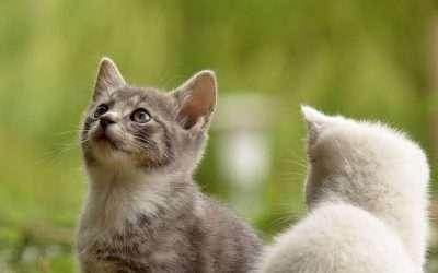 ¿Cómo proteger a las colonias felinas?