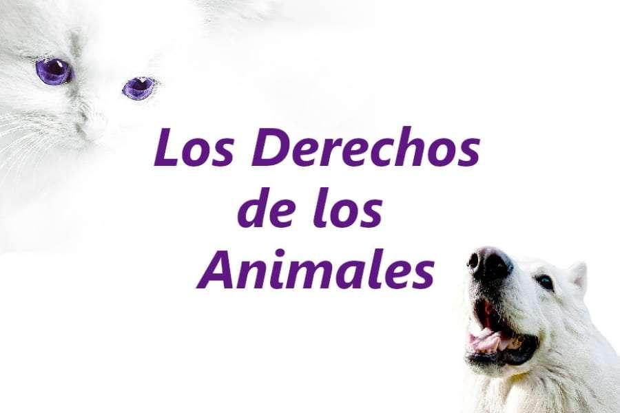 Artículo sobre los derechos de los animales