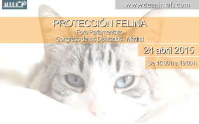 PROTECCIÓN FELINA – Cómo denunciar el maltrato en Colonias Felinas