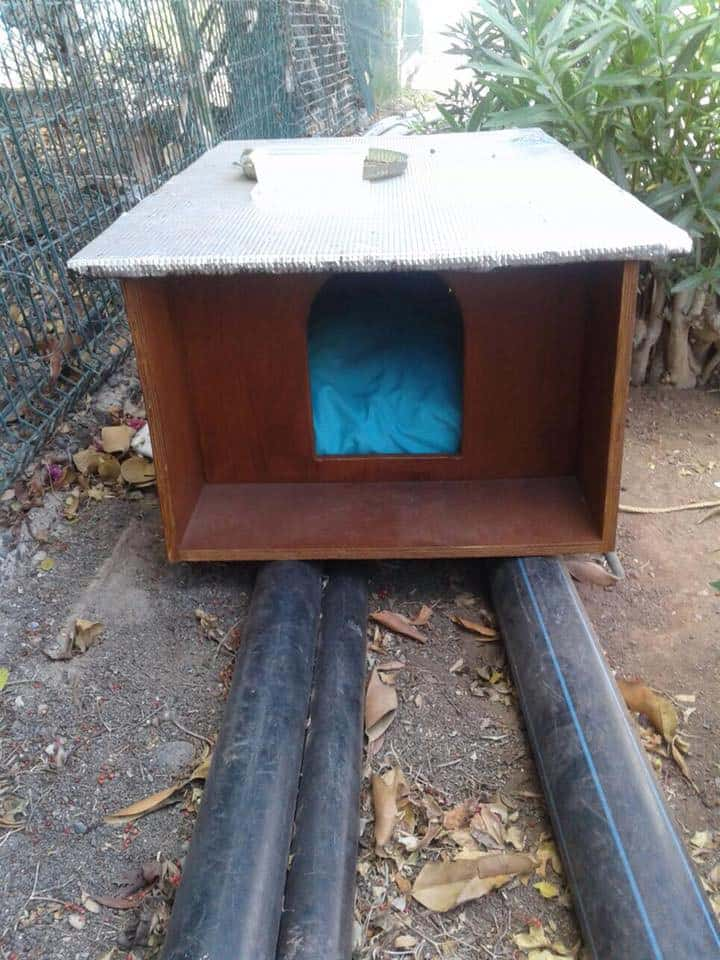 Casa para gatos en colonia felina.Suelo