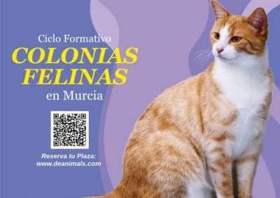 Ciclo Formativo sobre Colonias Felinas el día 28 de octubre de 2019