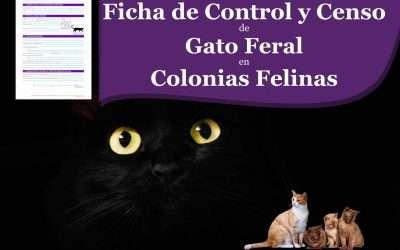 📋 Ficha de control y censo de 🐱 Gato Feral en ▷ Colonias Felinas