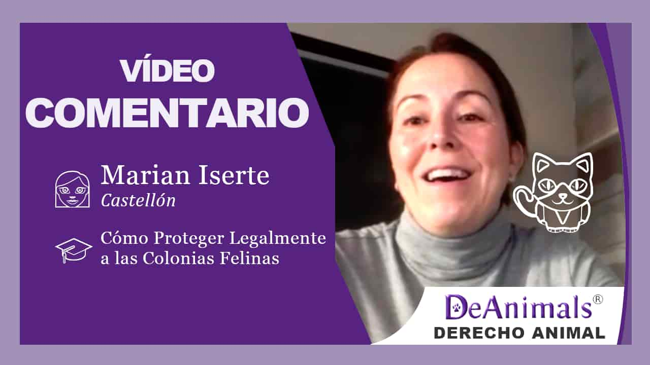 Vídeo-Comentario-Marian-Iserte-Castellón