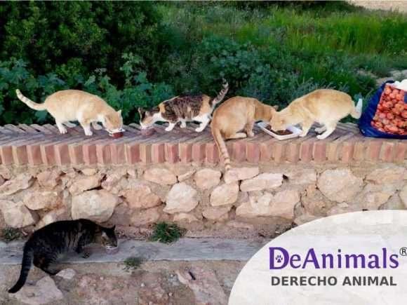 Gestión ética y legal de las Colonias Felinas