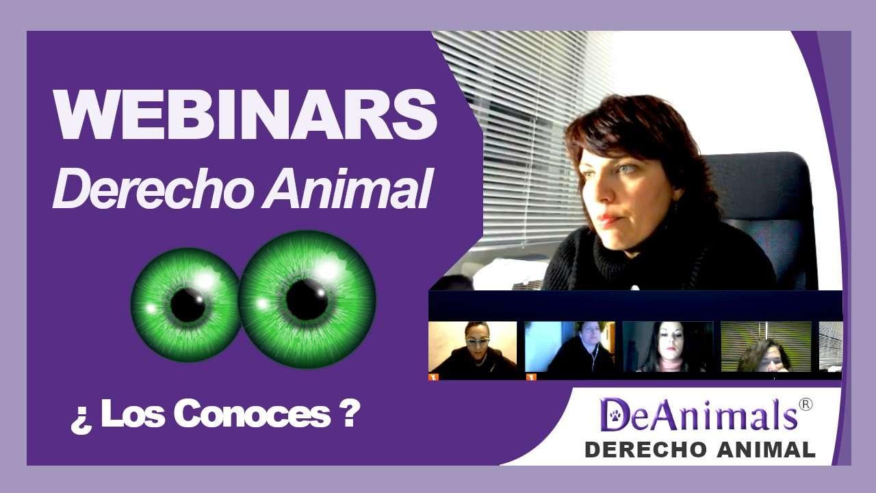 Miniatura vídeo PROMO Webinars Derecho Animal con DeAnimals