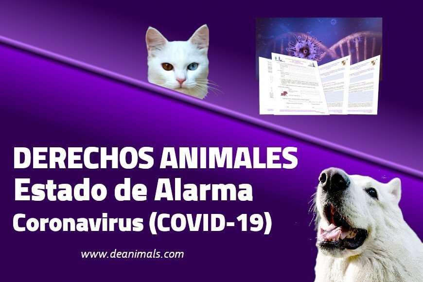 Los Derechos de los Animales durante el Estado de Alarma por Coronavirus