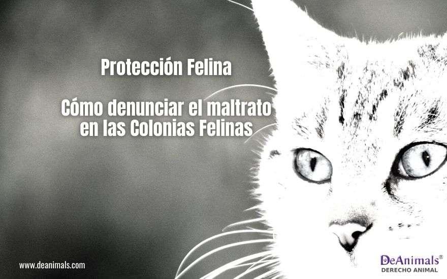 Protección Felina. Cómo denunciar el maltrato en las Colonias Felinas